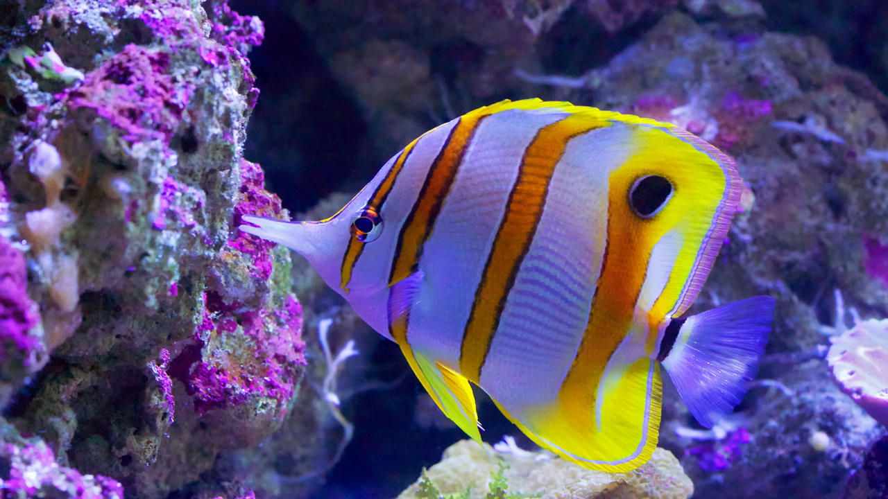 4 reasons you should not be put off visiting the great for Great barrier reef fish